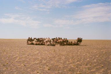 mongolia_00018